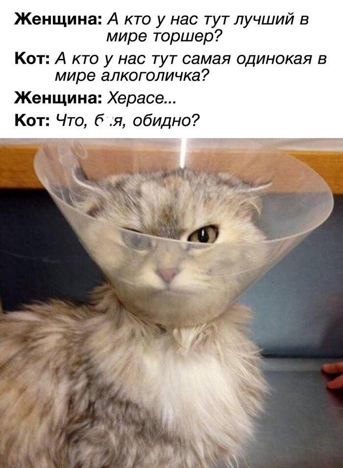 6. Тот случай, когда не спасает даже факт наличия кота