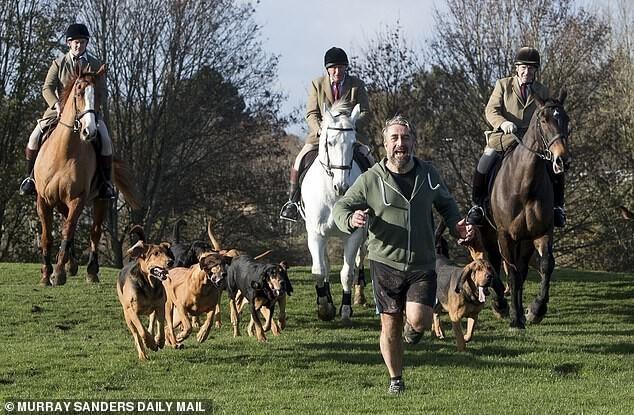 В британской традиционной охоте лису заменили человеком