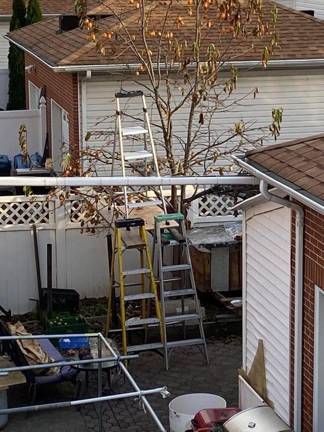 «Так мой сосед собирает фрукты с деревьев»