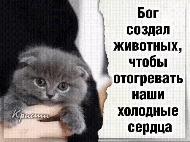 © Татьяна Пахоменко