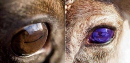 Глаза оленя в разное время года