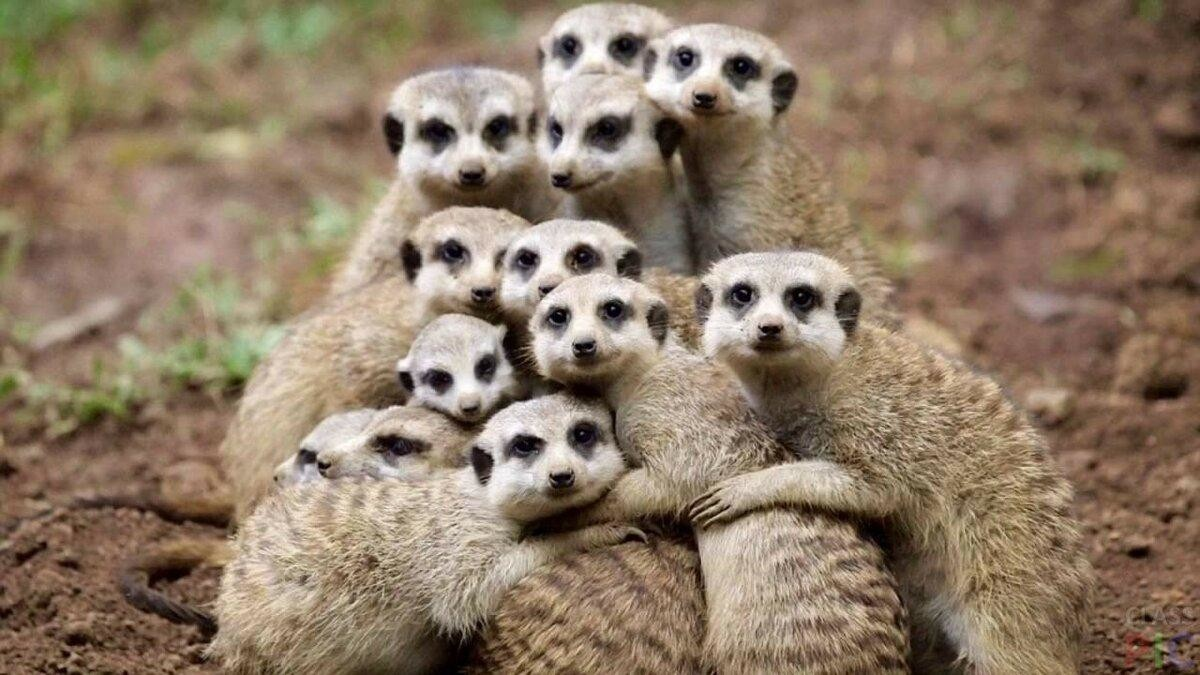 Самые крепкие семьи в мире животных! Топ-5