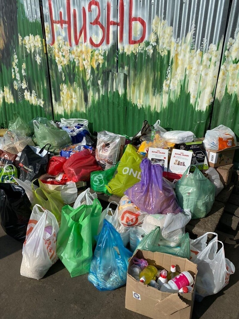 На собранные с картин средства Паша покупает корм, лекарства и другие средства, необходимые для бездомных животных в приютах