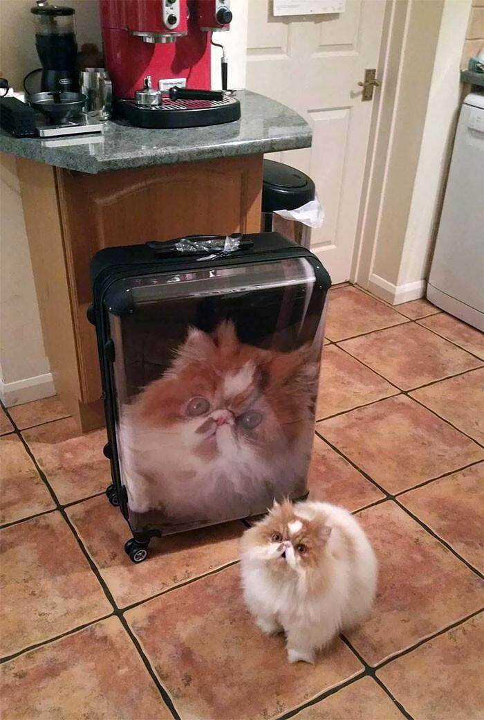 """""""Моя подружка подарила этот чемодан брату"""""""