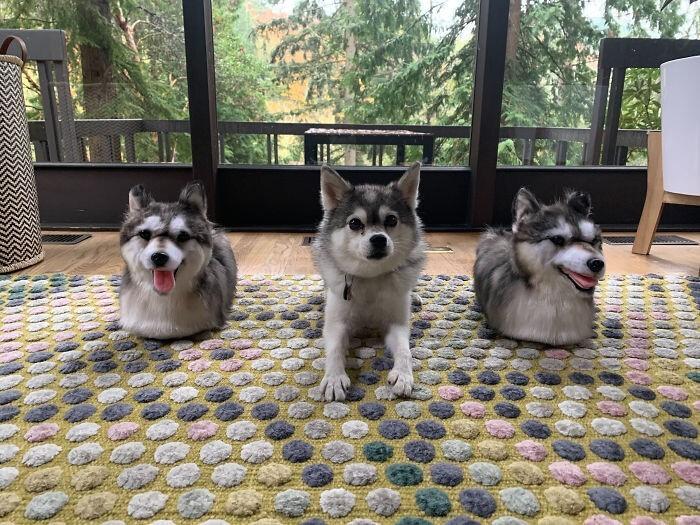 """""""Я подарила родителям тапочки - сделанный вучную портрет нашей собаки"""""""