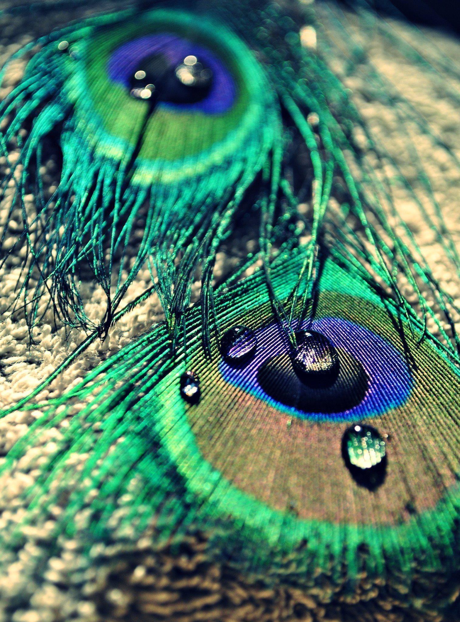 Жизнь вкапле воды: красивые фото ифакты