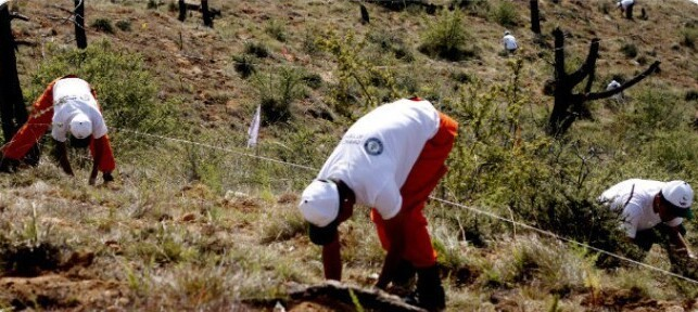 2. В 2015 году Бутан установил рекорд Гиннесса, когда группа из 100 человек за час посадила 49 672 дерева