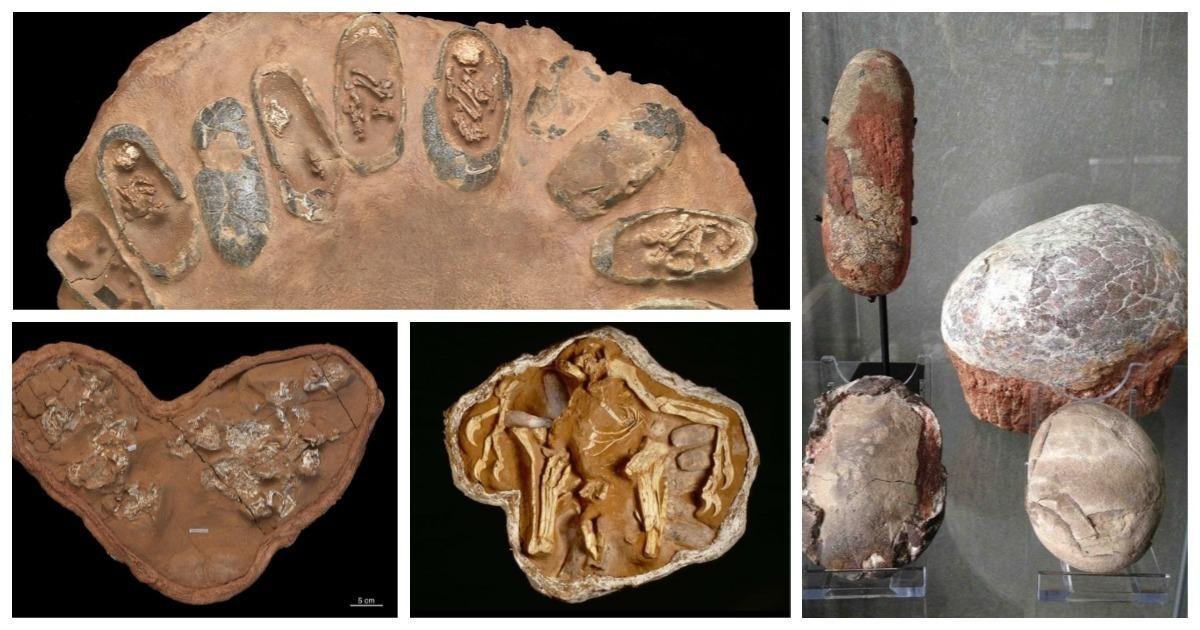 Каквыглядели яйца динозавров: факты ожизни миллион летдонашей эры