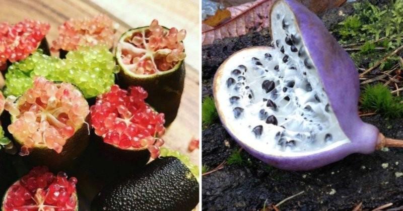 10 экзотических фруктов, о которых мало кто знает