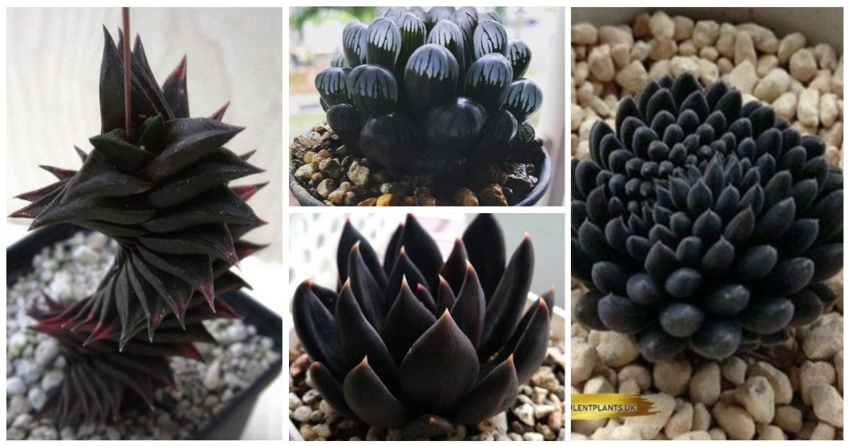 Чернота-то какая: 25черных-черных растений вчерном-черном лесу