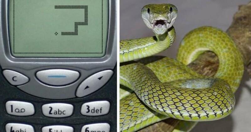 """Неожиданный конец """"змейки"""" на старой Nokia"""