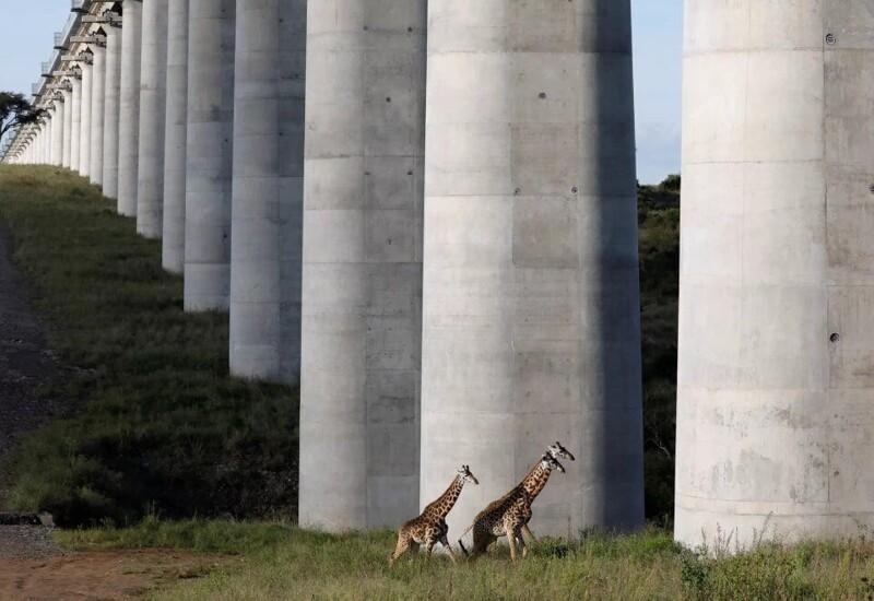 15. Железнодорожный мост в национальном заповеднике Найроби, Кения