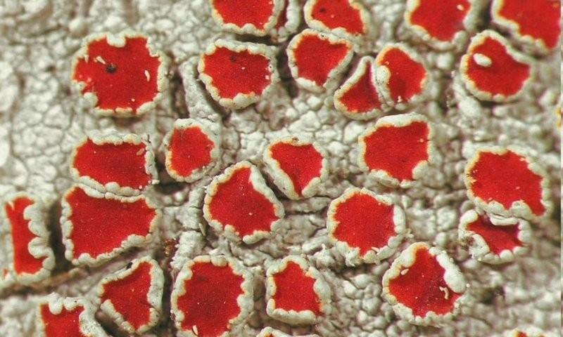 Красота вмелочах: 20невероятных фактов олишайниках