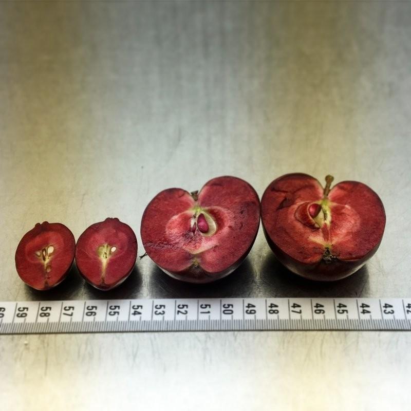 20сортов яблок, видкоторых васпоразит