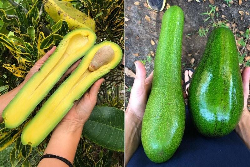 Истинные размеры растительного мира: 20примеров, окоторых вынедогадывались