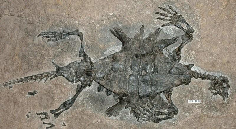Удивительные окаменелости, всуществование которых сложно поверить