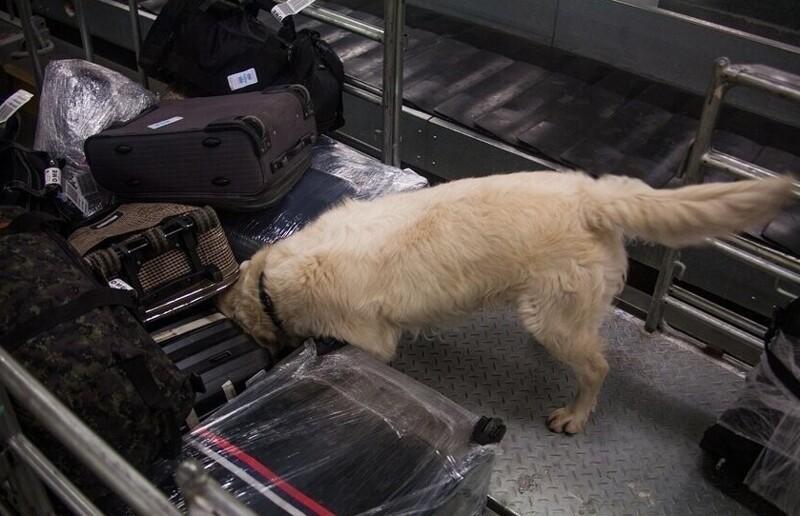 Какналадони: 9доказательств того, чтосотрудники аэропорта знают опассажирах больше, чемимхотелось бы