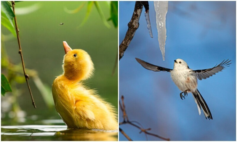 30 фото-финалистов конкурса The Bird Photographer Of The Year