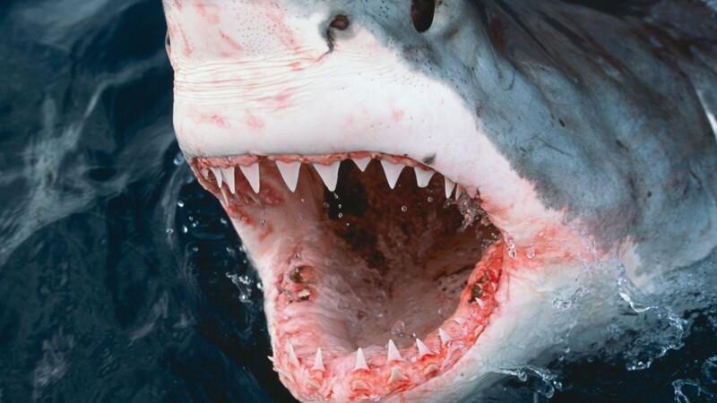 Ученые нашли первую вистории жертву акулы